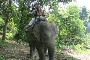 naek gajah