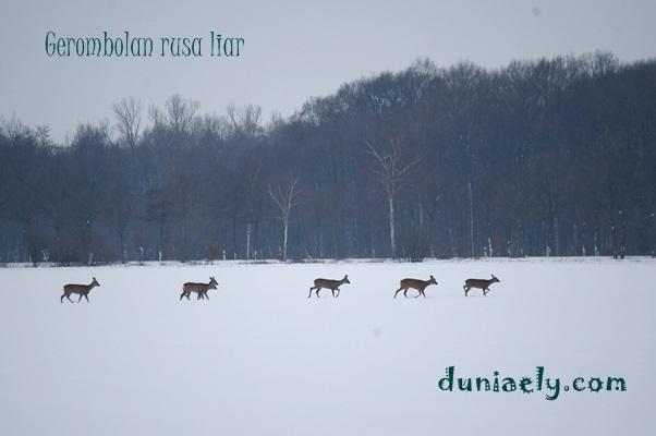 rusa-liar-dan-salju
