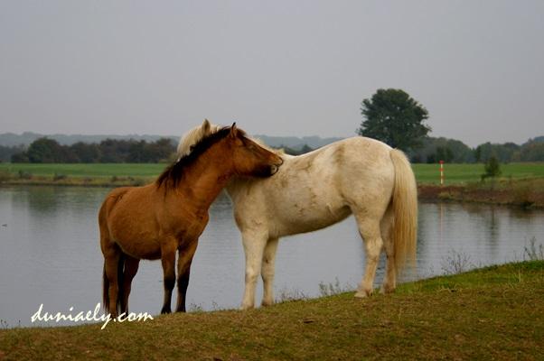 kuda-kasmaran